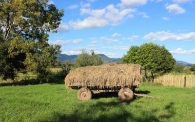 Soberanía alimentaria para la resiliencia sociecológica. Aprendizajes de las iniciativas del LIIISE